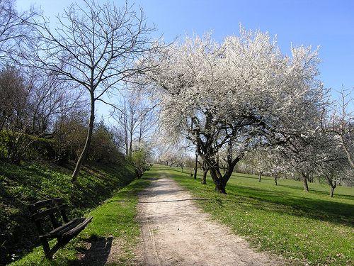 Villa Ghigi's park